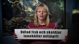 Miniatyr för inlägg Odlad fisk och skaldjur innehåller miljögift