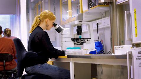 Miniatyr för inlägg Växtplankton som etablerar sig först slår ut konkurrerande bestånd