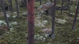 Miniatyrbild för inlägg Radarteknik som kan se genom skog