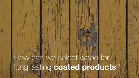 Miniatyrbild för inlägg Tinh´s research is about how to select wood for long lasting coated products